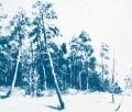 Ink-Woods